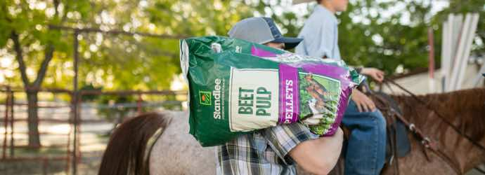 Everything You Need to Know About Beet Pulp for Horses – Part 1