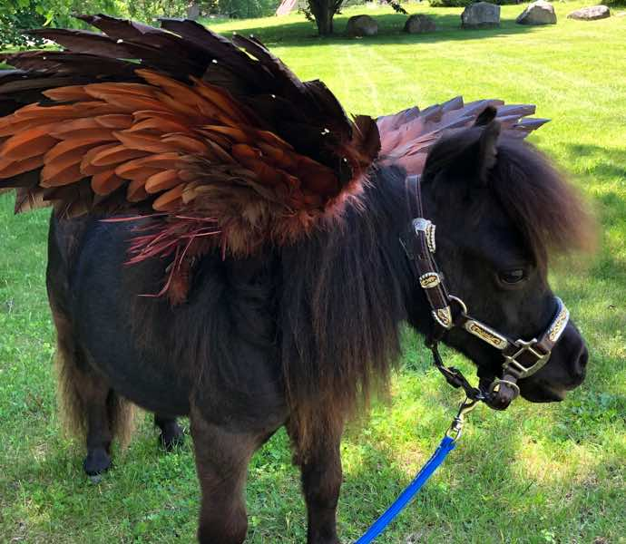 Black miniature therapy horse with wings