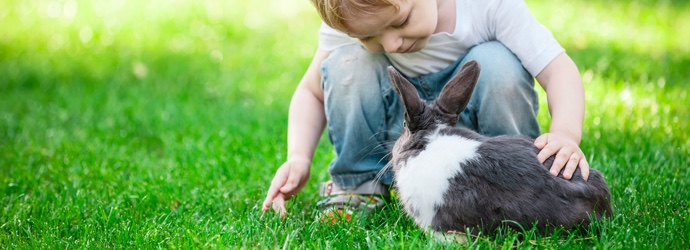 Bunny Love: 10 Tips for New Rabbit Owners