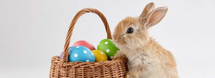 Adopting a Rabbit This Easter…What You Should Know