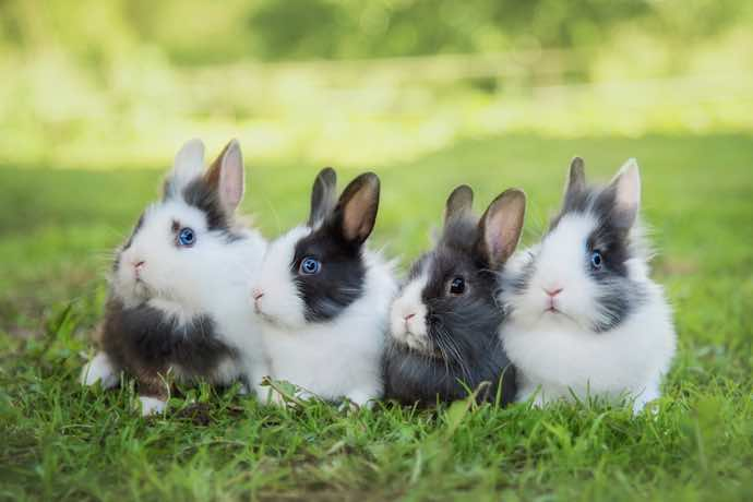 Four rabbits in the grass
