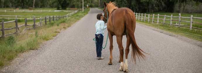 5 Common Horse Feeding Mistakes