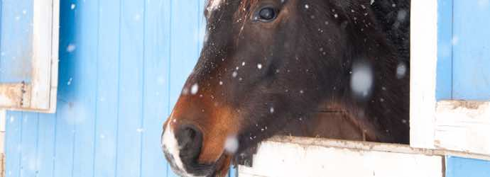 Feeding Horses: What You Need to Know About Forages and Winter