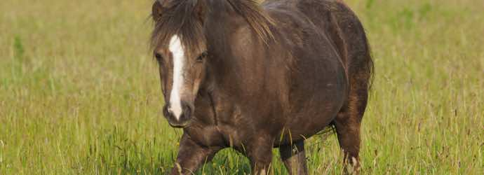 Symptoms, Causes and Feed Management for Laminitis