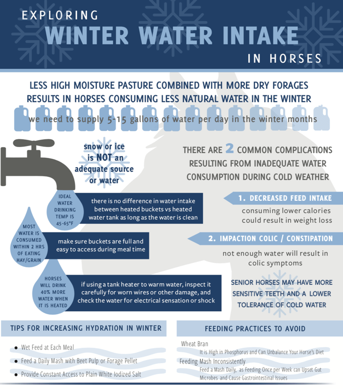 Horse Winter Water Intake Infographic