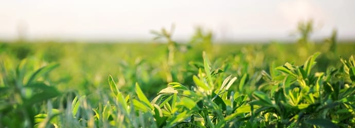Are you looking for a USDA Certified Organic Alfalfa forage option for your animals?