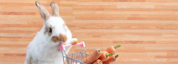 Grocery Shopping for Thumper