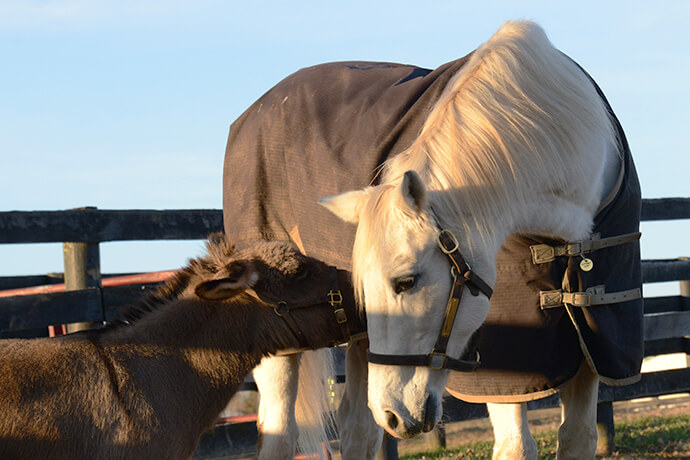 Soup the Stallion & George the Donkey Love