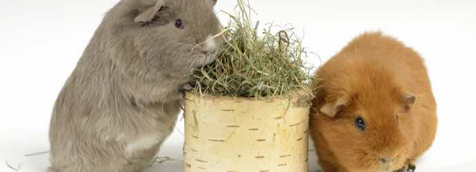 3 Tips for Choosing the Right Hay for Your Small Animal