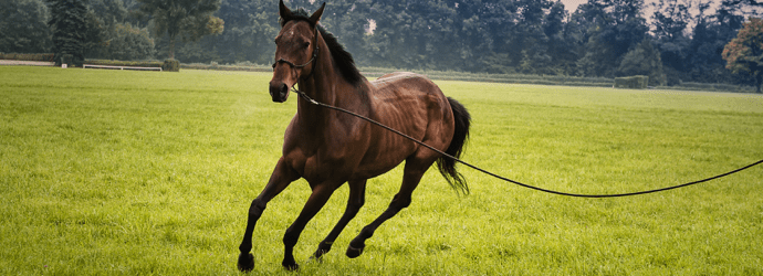 3 Ways to Safely Prep Your Underweight Horse for Winter