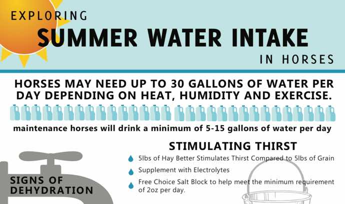 Water Intake for Horses Infographic
