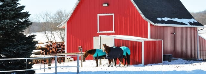 How Much Hay You Need To Store For the Winter Months? - Prepping Now