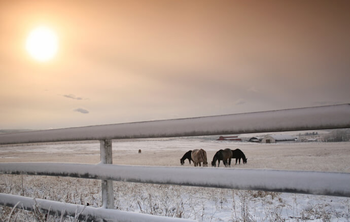 Horses in the field during winter